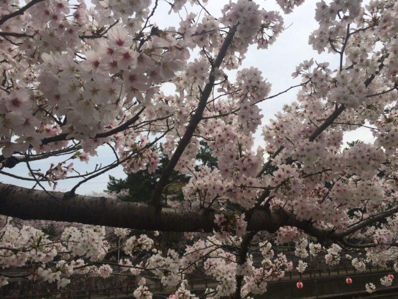 倉敷酒津公園で満開お花見!お弁当をチープ飯とは呼ばせない!