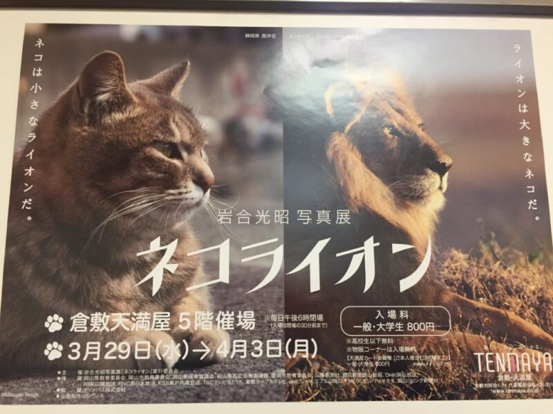 倉敷天満屋『岩合光昭写真展ネコライオン』招待されて限定マステも頂いた!