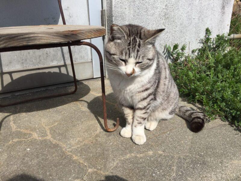猫島と瀬戸芸で有名な香川県の『男木島』でネコとアートに触れてきた!~猫じゃらす編~