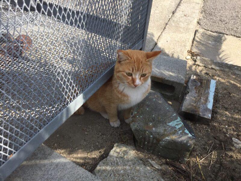 猫島と瀬戸芸で有名な香川県の『男木島』でネコとアートに触れてきた!~猫にまたたび編~