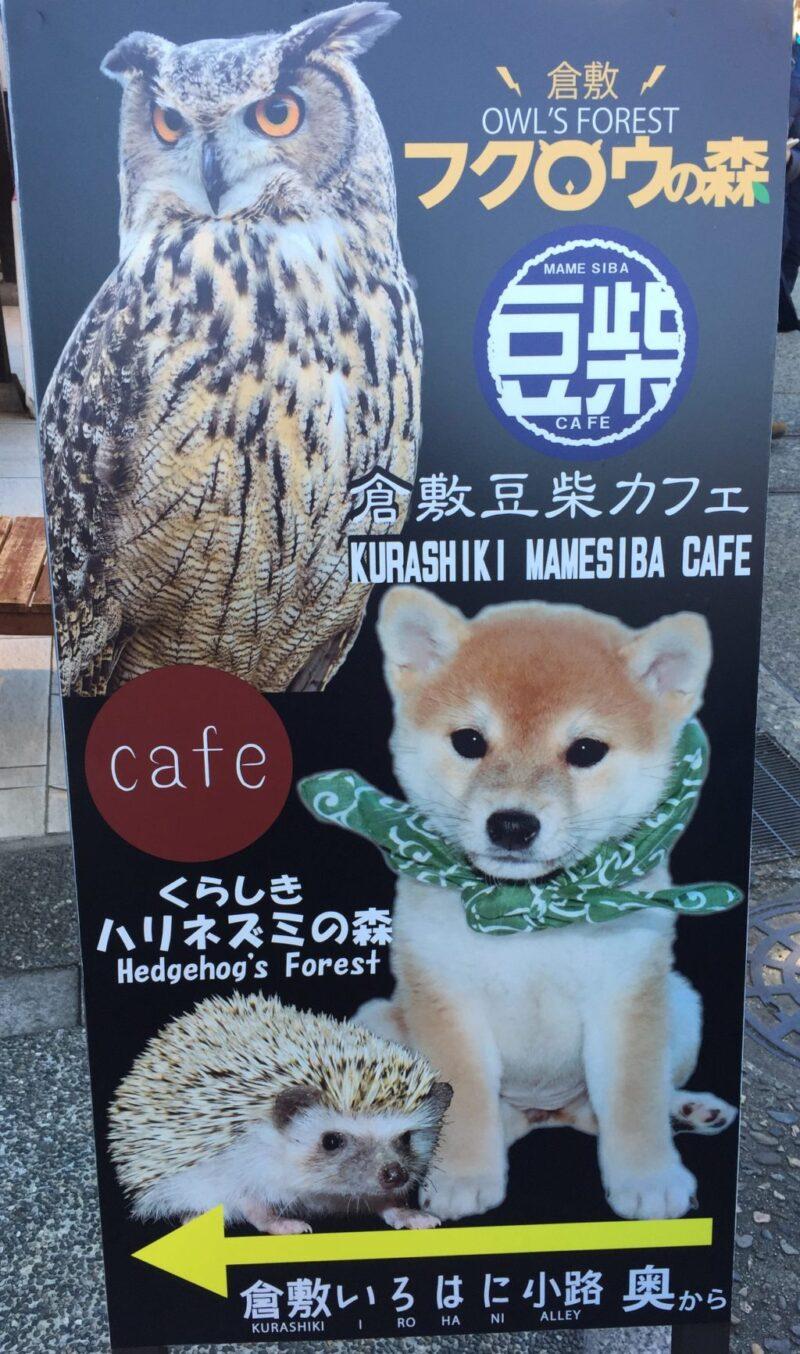 岡山県倉敷美観地区に全国初!可愛い豆柴だけのドッグカフェがオープン!