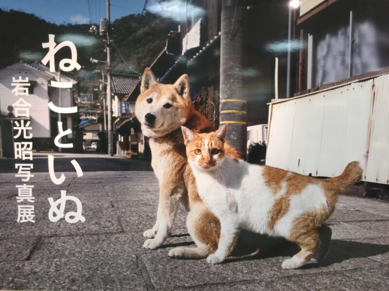 岩合光昭写真展『ねこといぬ』in倉敷天満屋に行ってきた!