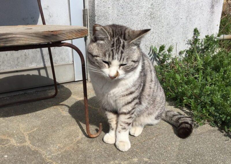 香川高松にある猫島『男木島』瀬戸芸のアートとネコをモフってきた!