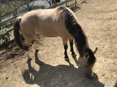 岡山勝央町『ファーマーズマーケットノースビレッジ』馬と農業体験教室!